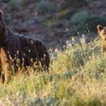 برگزاری کارگاه آموزش زیست محیطی در البرز